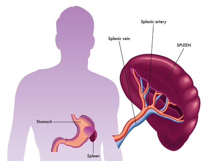 body pain diagram organs spleen pain diagram