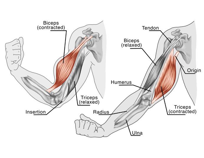 Arm Tendon Transfer Orange County Surgeons