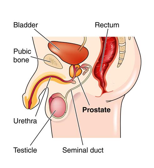 sex in düsseldorf prostata massage