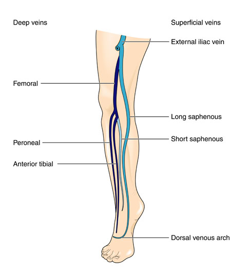 artery in leg how to find pulse
