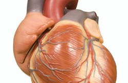 Bypass Graft Repair for Aortic Coarctation