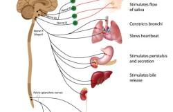 Laparoscopic Vagotomy