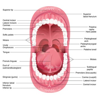 Mandibular Labial Frenectomy