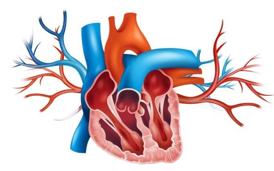 Minimally Invasive Aortic Valve Repair