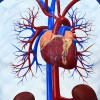 Even Minor Blockage in Young Adults Increases Heart Attack Risk