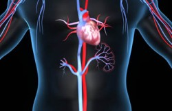 Patent Ductus Arteriosus Repair by Percutaneous Coil Embolization