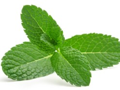 Can You Use Peppermint Oil for Nausea?