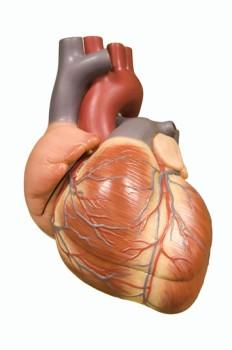 Beating Heart Atrial Septal Defect Closure