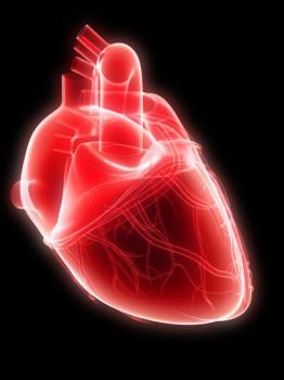 Beating Heart Pulmonary Artery Valve Replacement