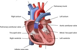 Beating Heart Pulmonary Valve Repair