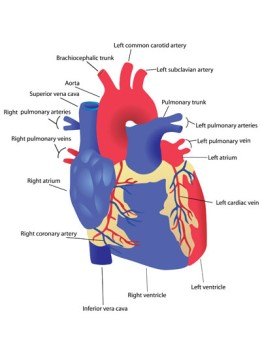 Beating Heart Tricuspid Valve Repair