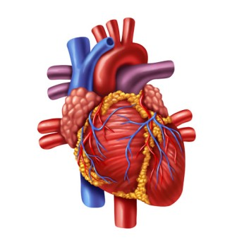 Beating Heart Ventricular Septal Defect Closure