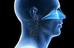 Endoscopic Endonasal Approach