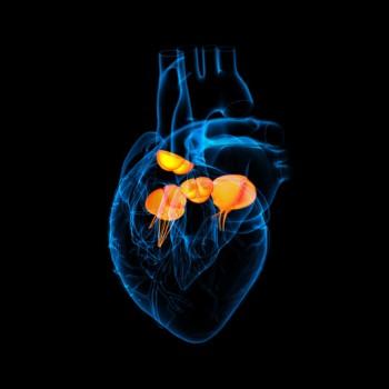 Heart Valve Repair