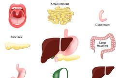 Laparoscopic Gastroduodenostomy
