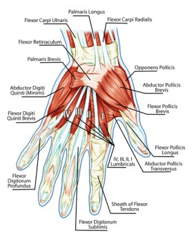 Flexor or Extensor Tendolysis