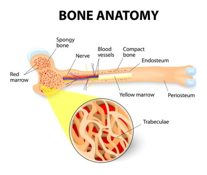 Allogenic Bone Marrow Transplant by OrangeCountySurgeons