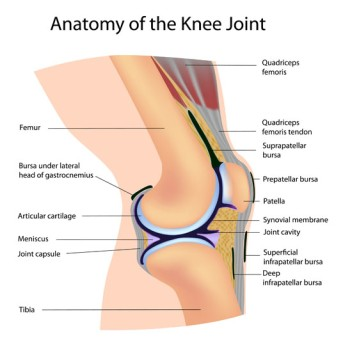 Arthroscopic Partial Knee Replacement by OrangeCountySurgeons