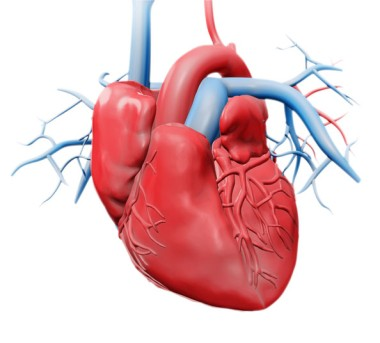 Beating Heart Valve Repair by OrangeCountySurgeons