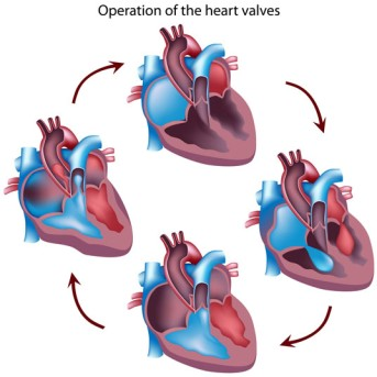 Mitral Valve Repair Surgery by OrangeCountySurgeons