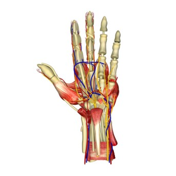 Flexor or Extensor Tendolysis by OrangeCountySurgeons